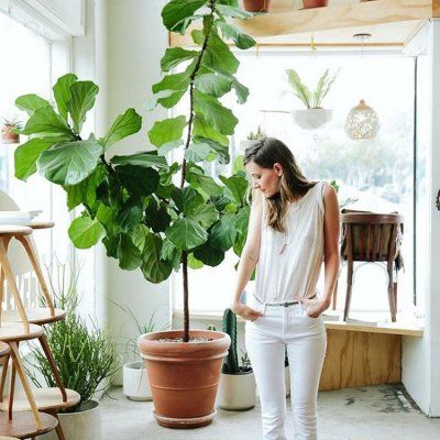 Are Plants the New Food on Instagram?