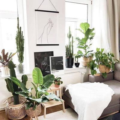 Add Greenery to Your Home with These Dollar Store Buys ...