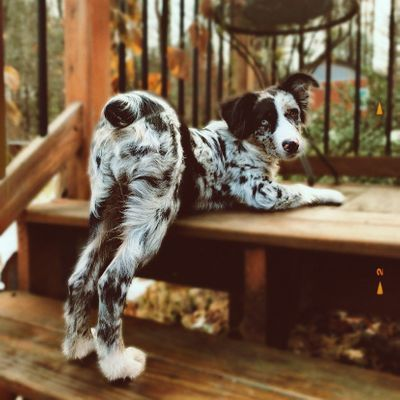 10 Ways Your Dog Can Help You Lose Weight ...