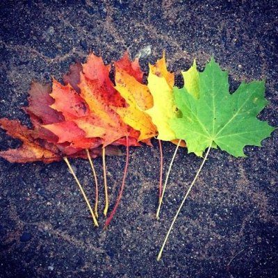 20 Flawless Snapshots of Fall Leaves Changing ...