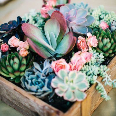 Plants 🍀🍃 to Keep around 🏡🏢 for Girls Needing More Positive Energy 👆🏼👍🏼 ...