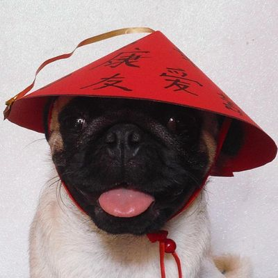 Types of Dogs 🐶 in the Chinese Zodiac 🏮 ...