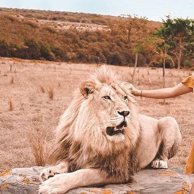 7 Leo Love Traits to Watch out for ...