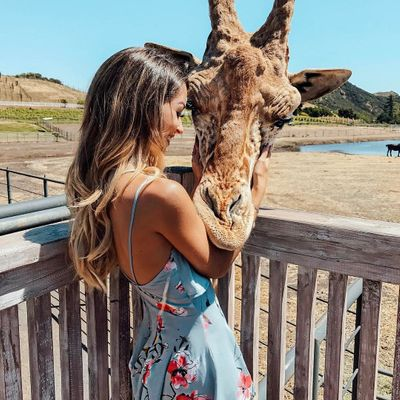 How to Choose an Ethical Safari 🦁🐘to Be a Responsible Traveler ♻️ ...