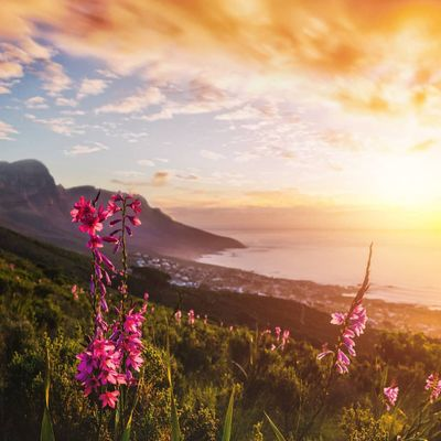 8 Compelling Reasons to Visit Cape Town ...