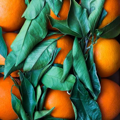 7 Citrus Fruits to Make Your Mouth Water ...