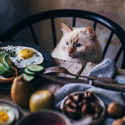 7 Foods Cats Love to Eat as a Treat ...