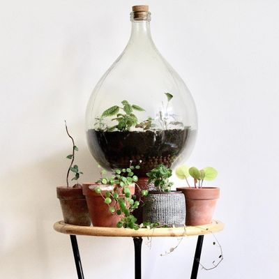 Step by Step 📖 Guide on How to Grow 🌱 a Perfect 👌 Bottle 🍼 Garden 💐 ...