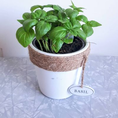 8 Extraordinary 🤗 Health 🤒 Uses for Basil 🌿 You Probably Don't Know 💁♀️ ...