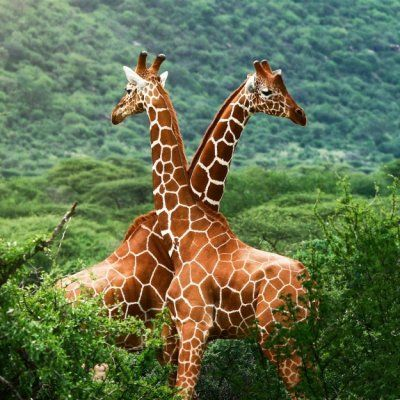 The Amazing Wildlife of Africa's National Parks and Game Reserves ...