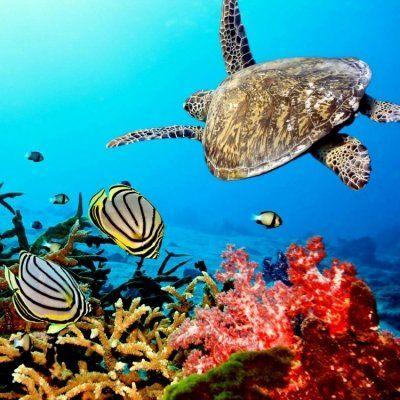 40 Wonders of the Coral Reef ...